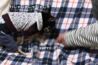 IMG_7428・2 コピー