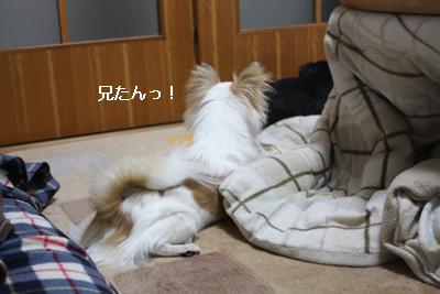 IMG_7538・2 コピー
