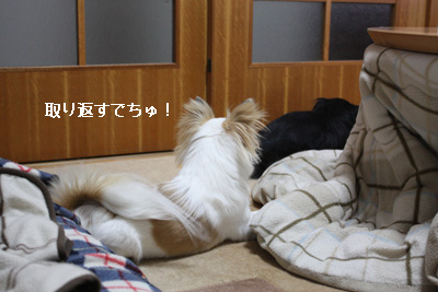 IMG_7536・2 コピー