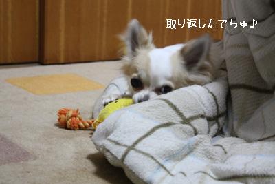 IMG_7553・2 コピー