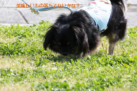 IMG_9180・2 コピー