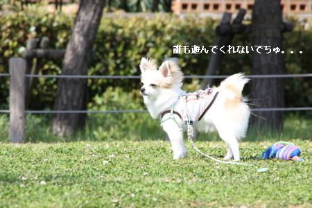 IMG_9183・2 コピー