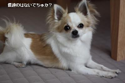 IMG_9794・2 コピー