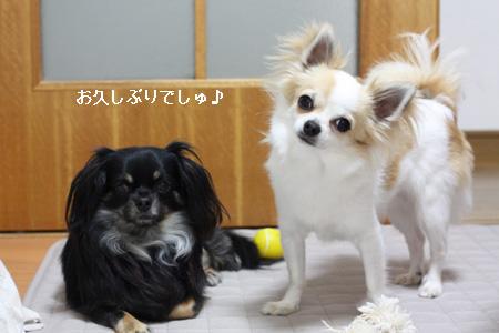 IMG_9927・2 コピー