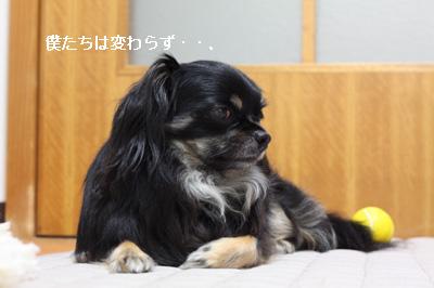 IMG_9924・2 コピー