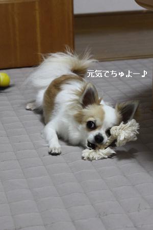 IMG_9928・2 コピー