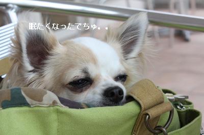 IMG_9997・2 コピー