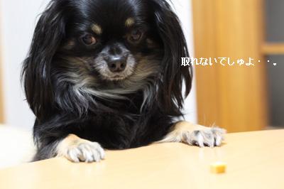 IMG_6169・2 コピー