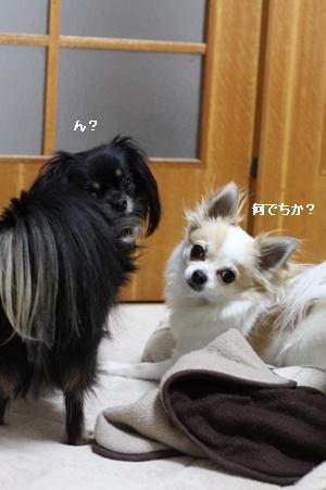 IMG_6638・2 コピー