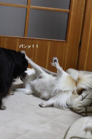 IMG_6630・2 コピー