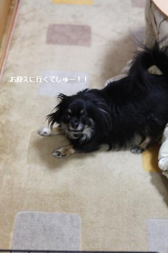 IMG_8443・2 コピー