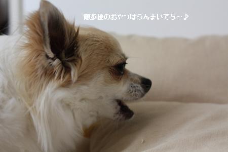 IMG_8720・2 コピー