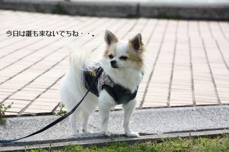 IMG_8840・2 コピー