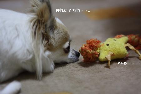 IMG_9547・2 コピー