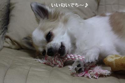 IMG_0147・2 コピー