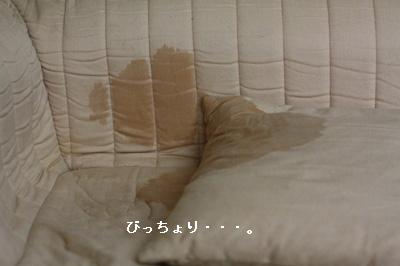 IMG_0289・2 コピー