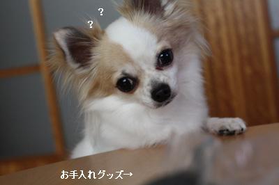 IMG_0586・2 コピー
