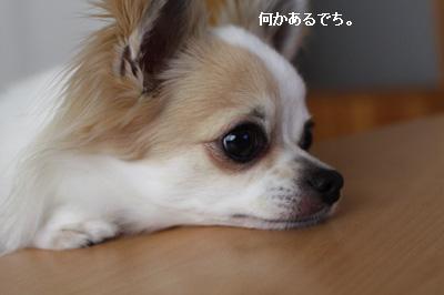 IMG_0581・2 コピー
