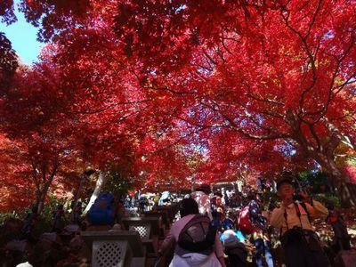 ooyama201411c.jpg