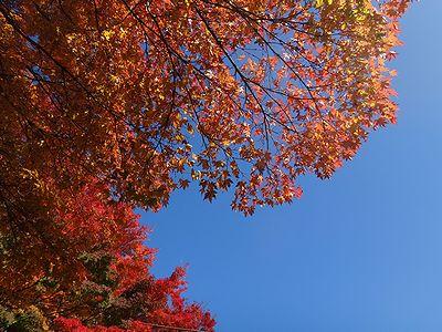 ooyama201411p.jpg