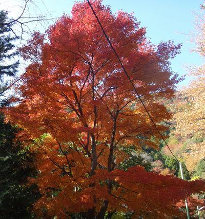 ooyama201411z.jpg