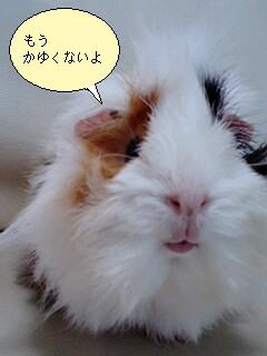 kiss何~?