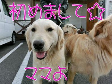 201311403413.jpg