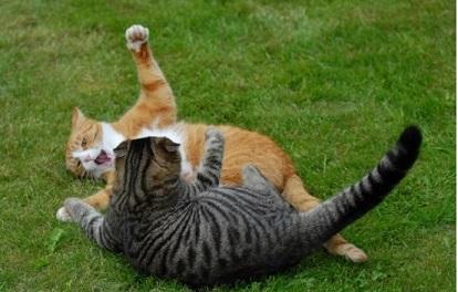 Cat-Fight7.jpg