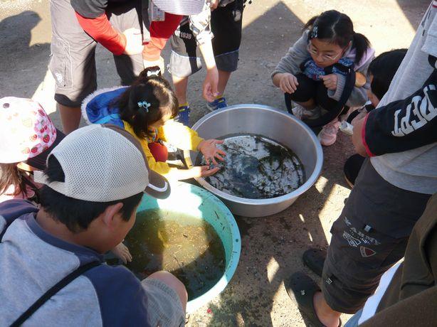 水生生物調査