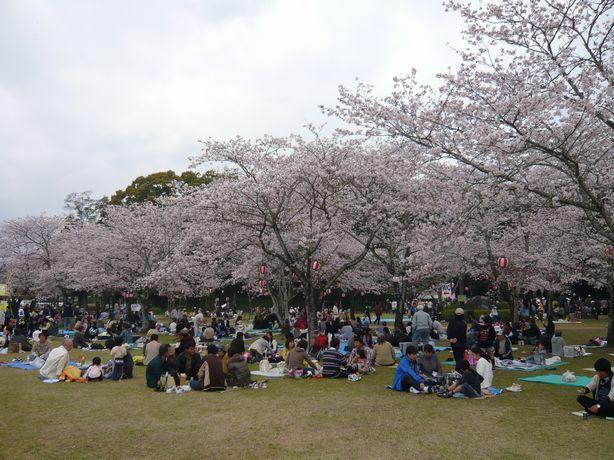 西都原の桜2010