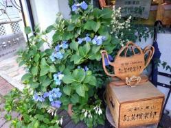 2013年6月22日at紅茶倶楽部1