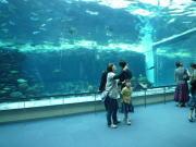 名古屋港水族館100606-3