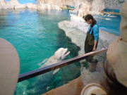 名古屋港水族館100606-2