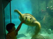 名古屋港水族館100606-4