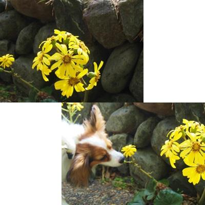 お花くんくん