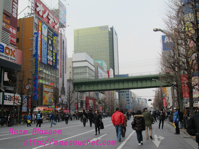 akiba20110206.jpg
