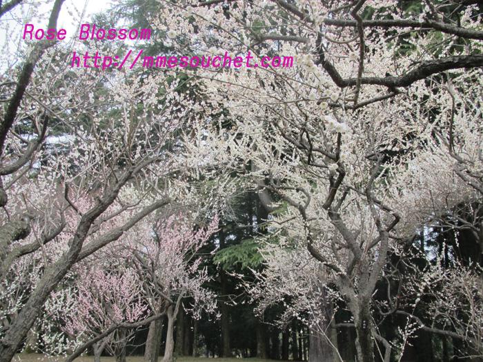 bairin201103231.jpg