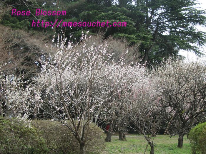 bairin201103235.jpg