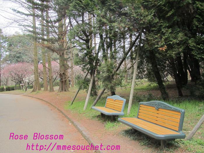 bench20110323.jpg