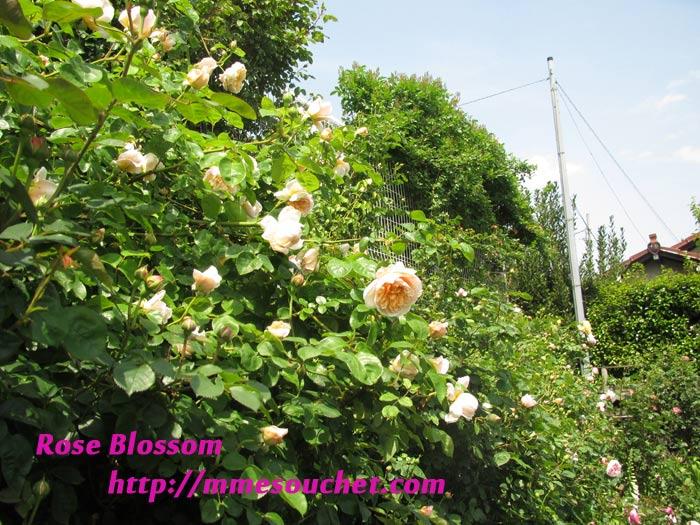 cafe201105142.jpg