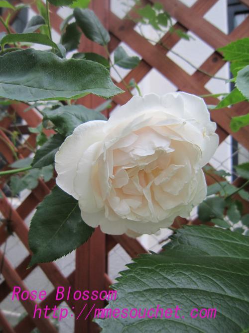 carieru20100518.jpg