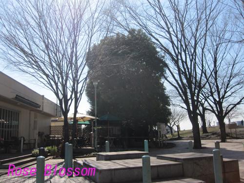 daikanyama201002204.jpg