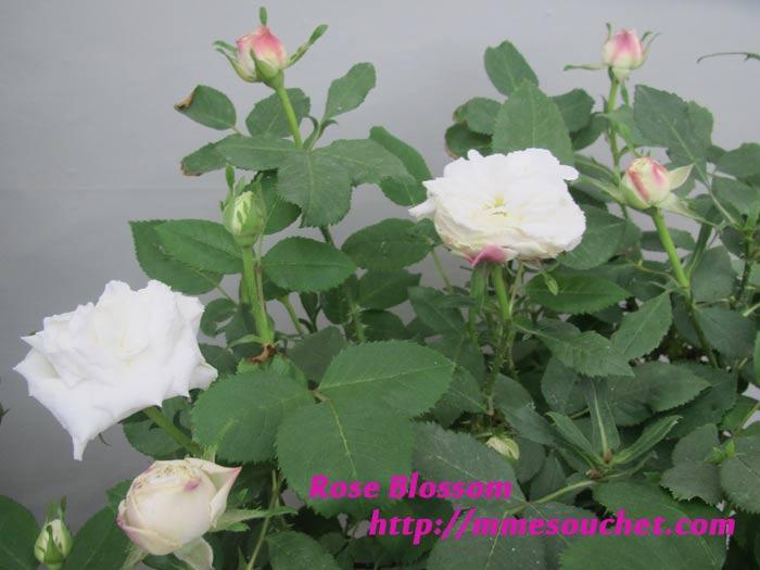 erizaboeru20110516.jpg