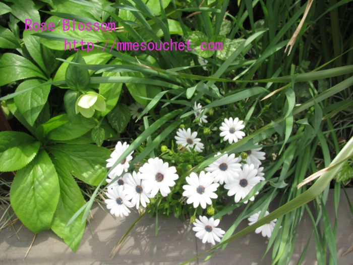 flower20110501.jpg