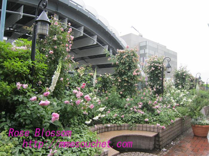 garden120100524.jpg