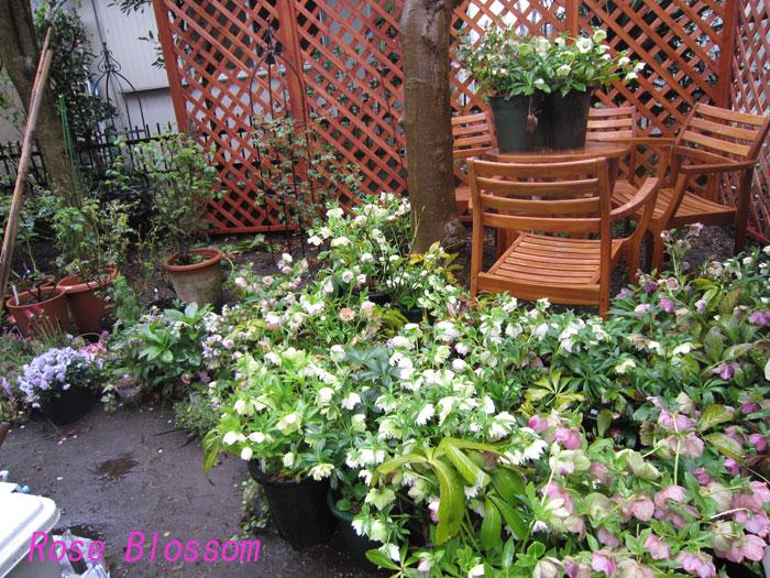 gardenherebo20100405.jpg