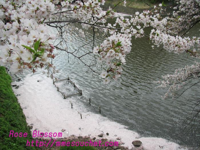 hanakiada201104092.jpg