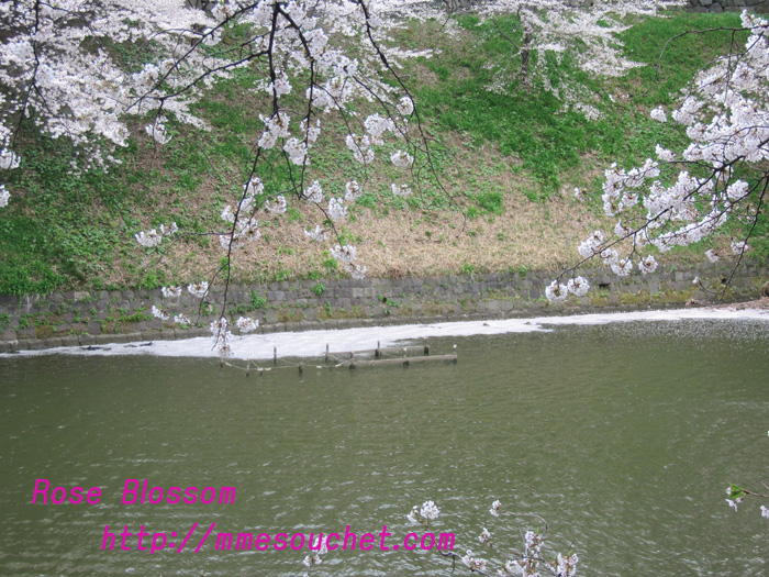 hanakkada201104091.jpg