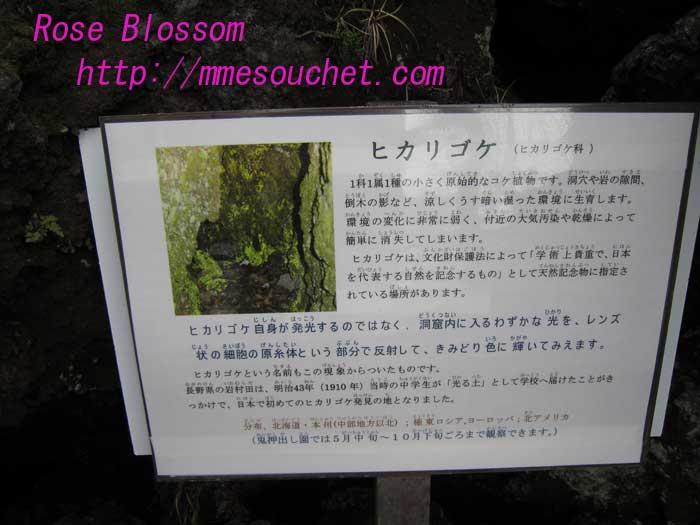 hikarigoke20100509.jpg