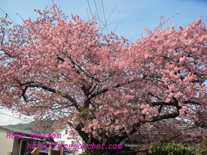 honboku20110226.jpg